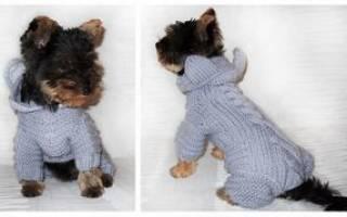 Вяжем одежду для собак: делаем крючком своими руками