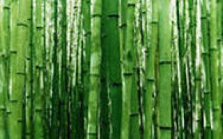 Что лучше: носки из бамбука или хлопка