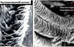 Валяние из шерсти для начинающих: подробная инструкция с фотографиями
