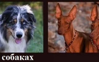 Поводок для собак своими руками: мк с пошаговыми фото и видео-уроками для начинающих